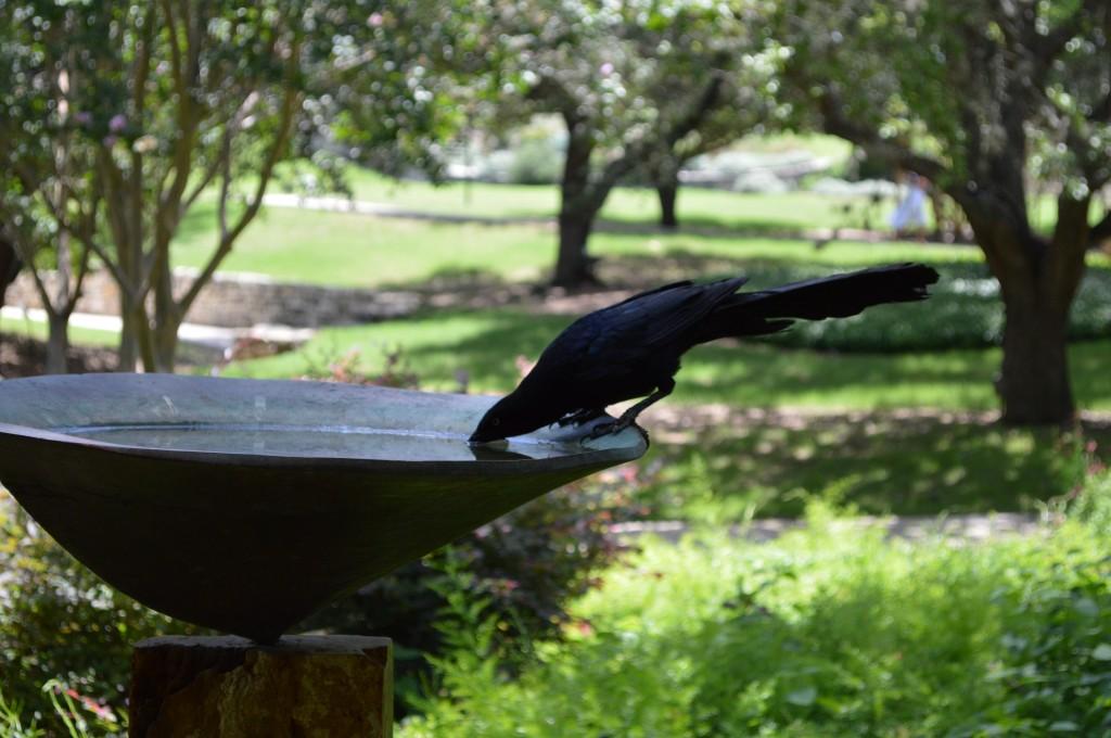 Bird quaff